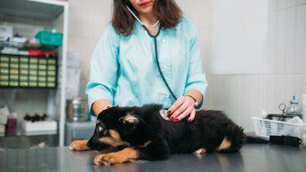 assicurazione spese veterinarie cane