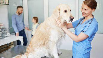 costo assicurazione cane