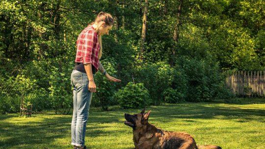 libri addestramento cane